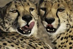 African Safari Workshop - Zimbabwe and Botswana