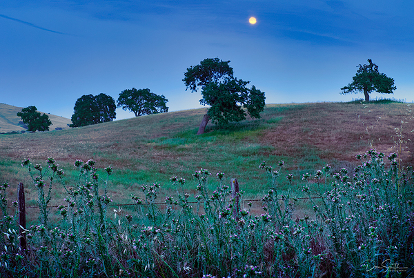 Full Moon Over Blue Oaks, Central California