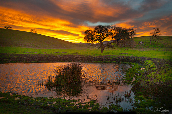 Sping Sunrise and Pond, Central California