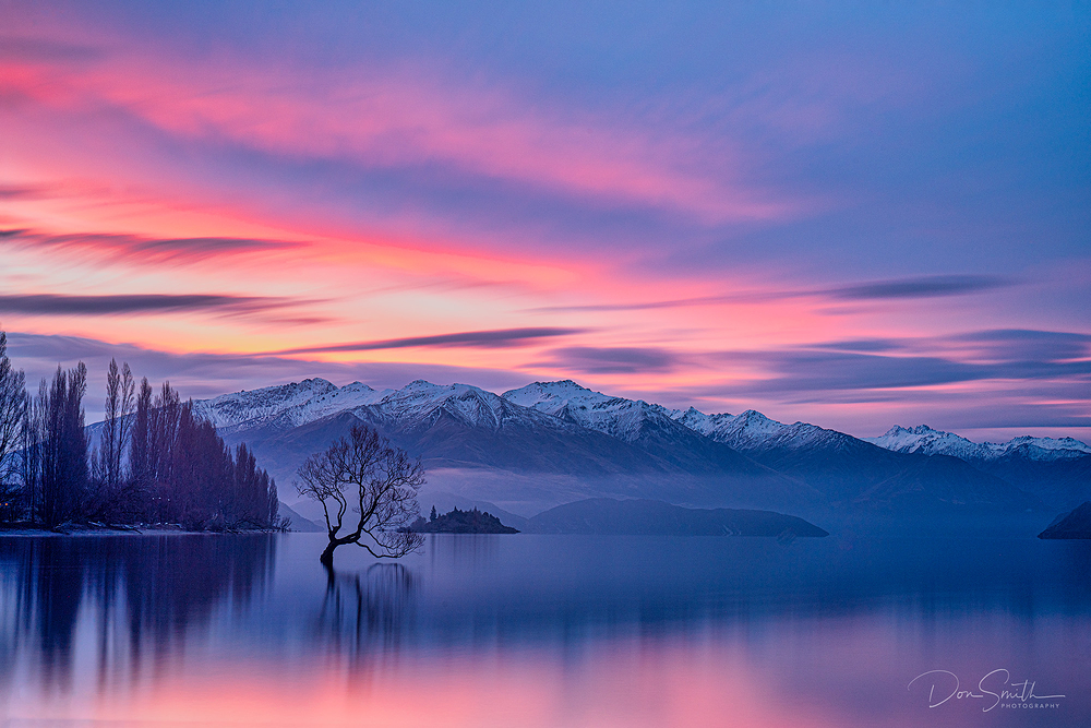 Dusk Sky, Wanaka Willow, New Zealand