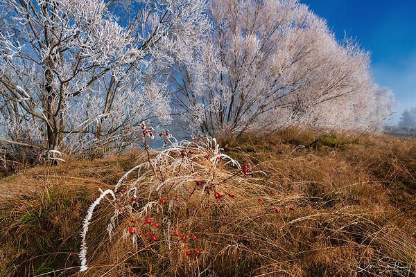 Frosty Morning Near Twizel, New Zealand