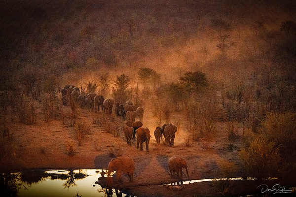 Elephants Through the Bush, Zimbabwe