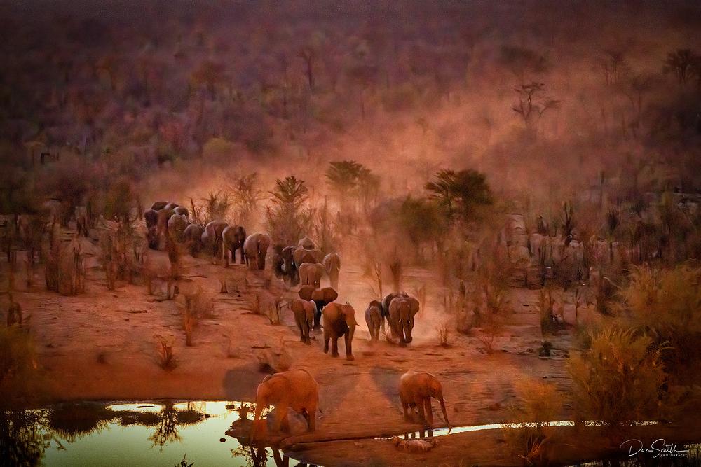 Elephant Herd, Victoria Falls NP, Zimbabwe