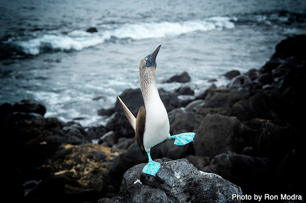 New Workshop :: Galapagos Islands :: May 8-16