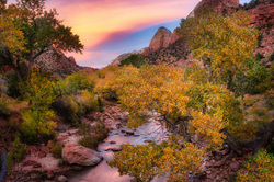 Virgin River and Cottonwoods, Zion National Park,