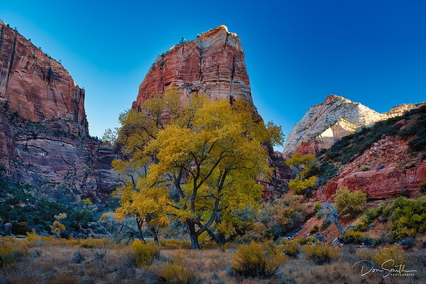 Cottonwood and Angel's Landing, Zion NP, Utah