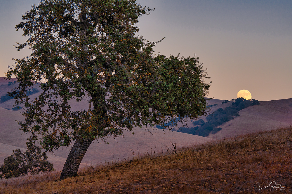 Full Moon and Blue Oak, Central California