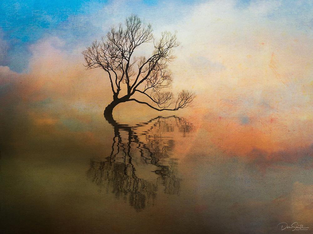Wanaka Tree and Fog, New Zealand