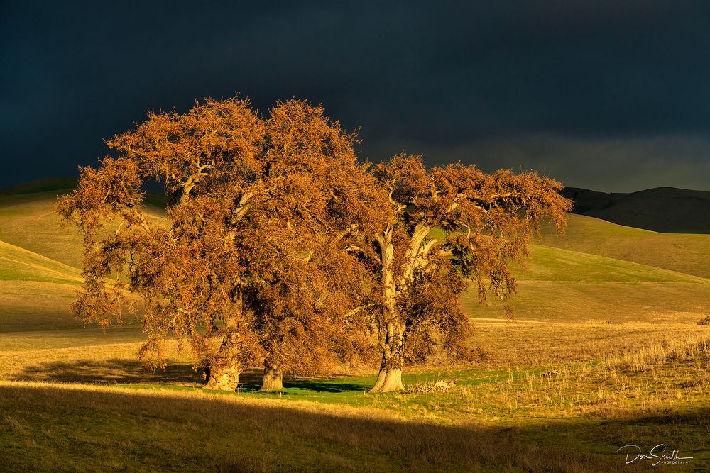 Blue Oaks and Stormy Sky, Santa Clara Valley