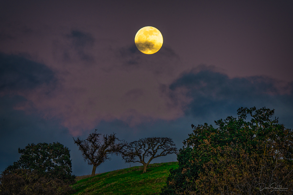 Full Moon Rising Over Oak Trees, Central CA
