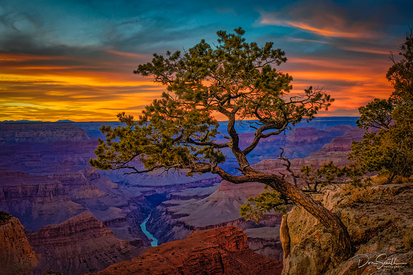 Colorado River and Juniper, Grand Canyon