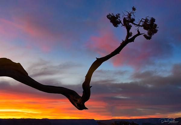 Juniper Branch and Dusk Sky, Grand Canyon
