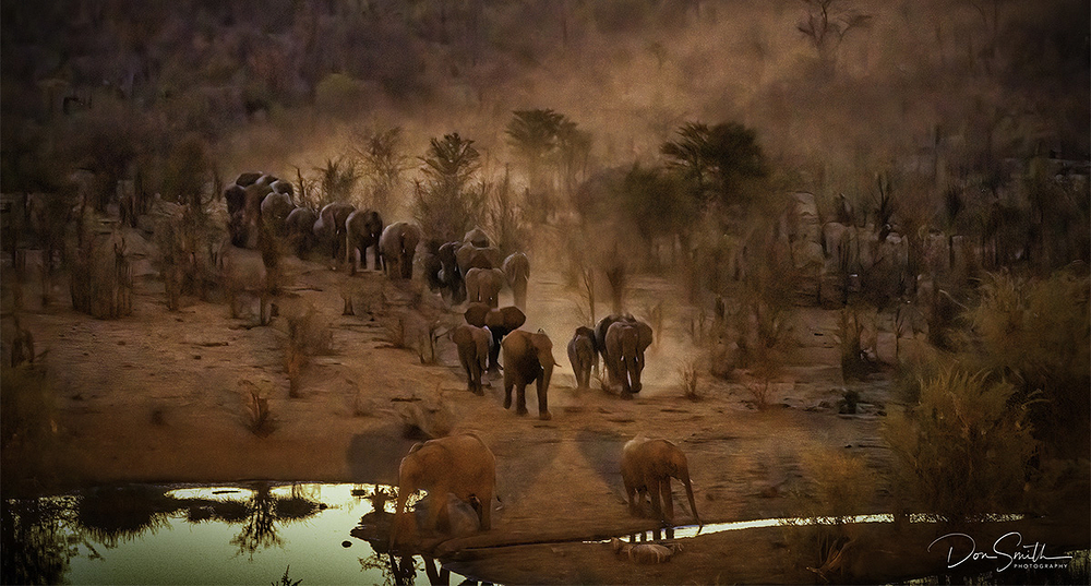 Elephant March, Zimbabwe, Africa