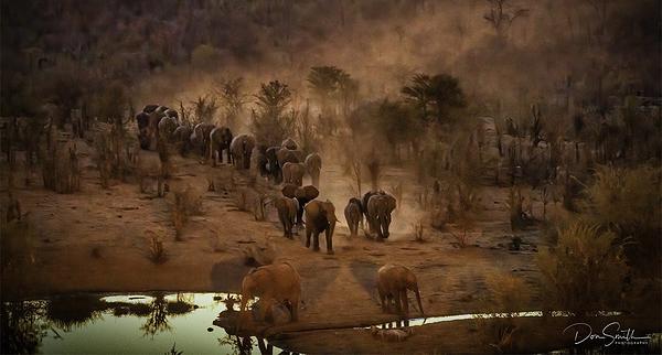 Elephant March, Zimbabwe, Africa