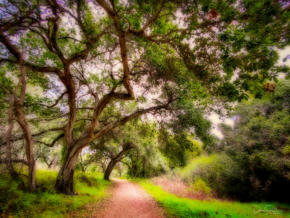 Garland Ranch, Carmel Valley, California