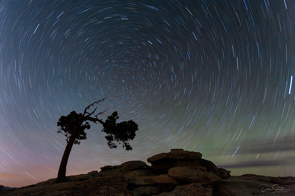 Star Trails and Jeffrey Pine, Yosemite NP