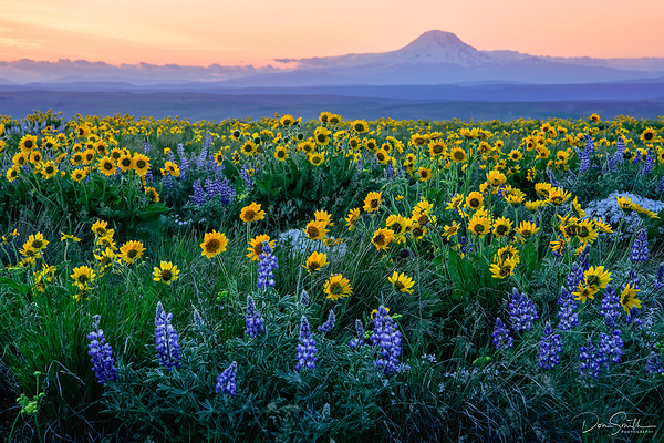 WIldflowers and Mt. Adams, Oregon Workshop
