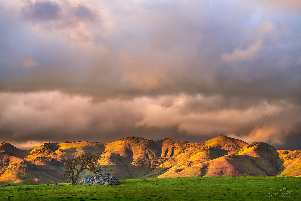 Evening Light, California Coastal Hills