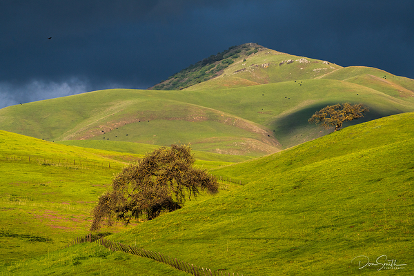 Valley Oaks and Stormy Sky, California