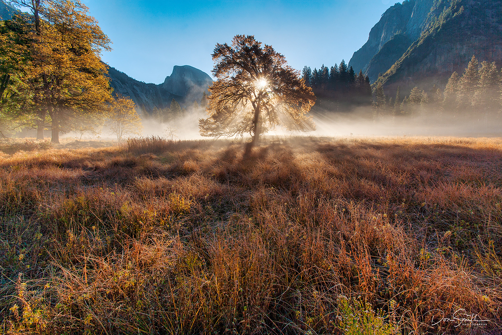 Backlit Elm, Yosemite National Park, California