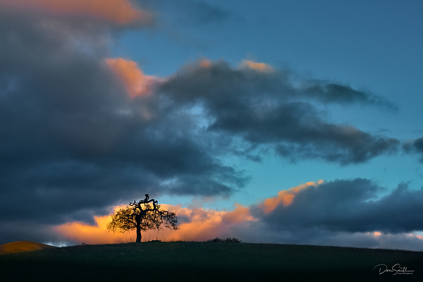 Valley Oak and Sunset Sky, California