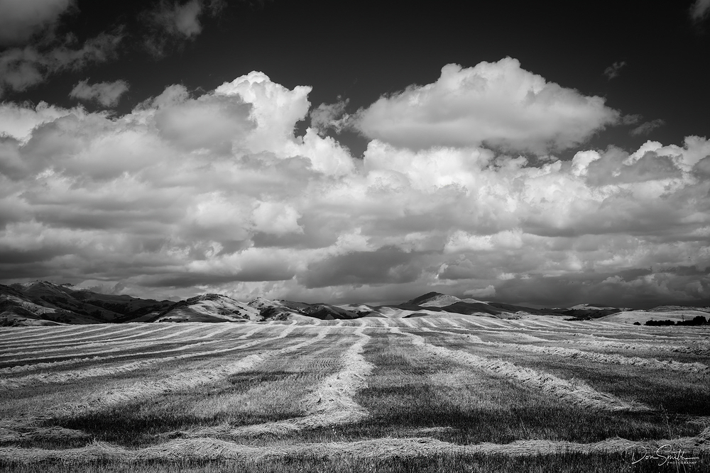 Newly-Mown Hay Fields, Central California