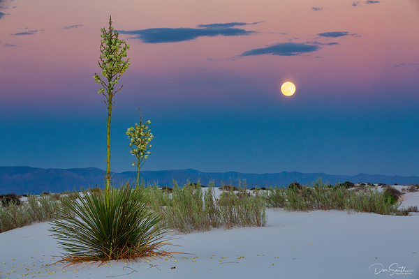 Moonrise Over Yucca, White Sands NP, New Mexico