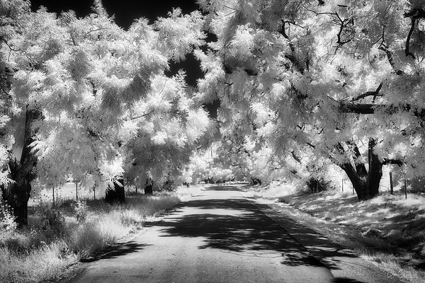 Tree Tunnel and Country Lane in IR
