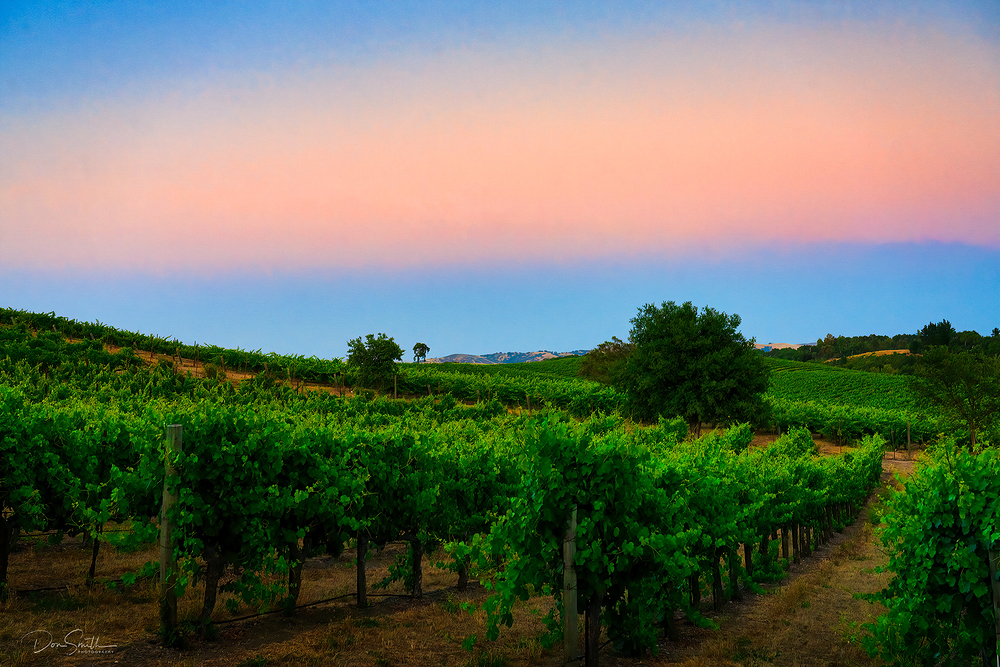 Vineyard View and Twilight, Paso Robles, CA