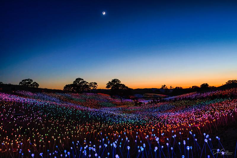 Field of Lights at Sensorio, Central California