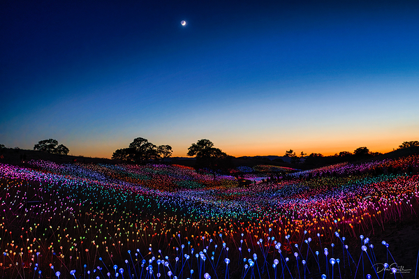 Field of Lights at Sensorio, Central California