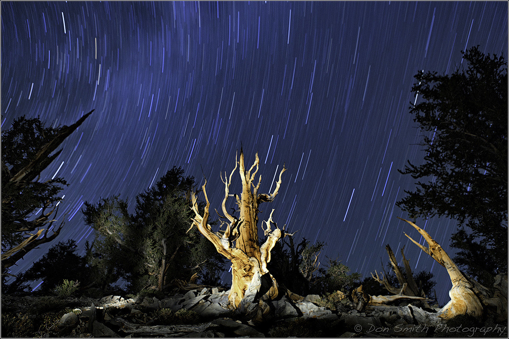 An Evening With The Ancient Bristlecone Pines