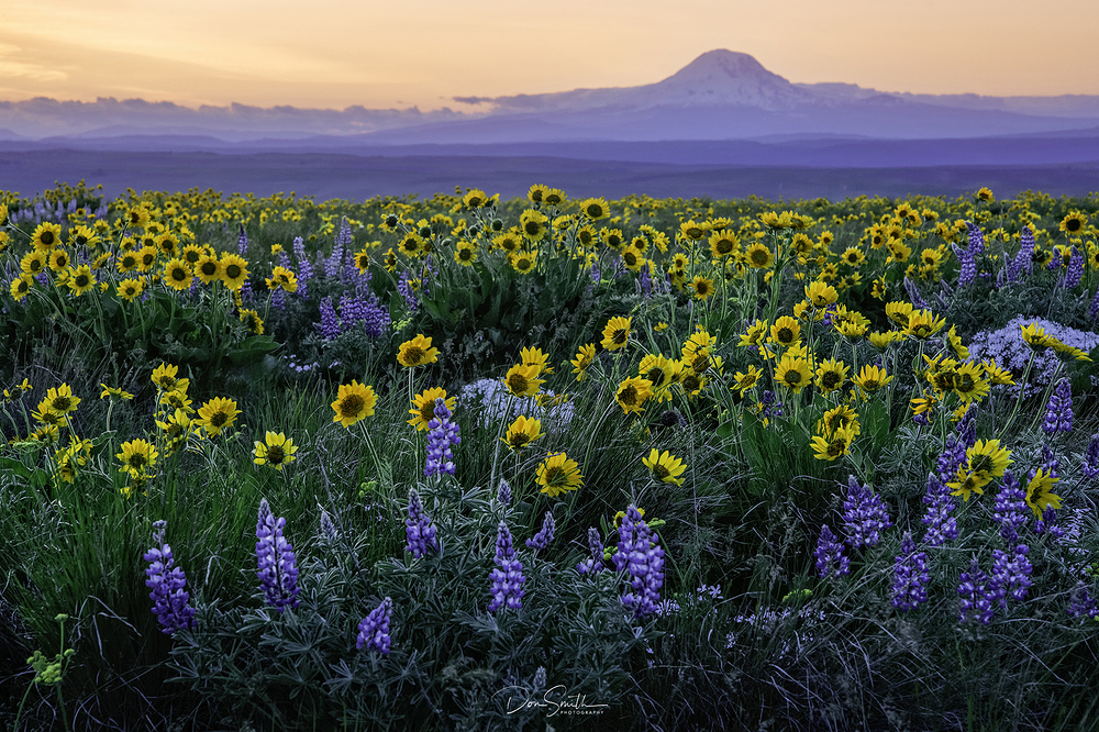 Spring Wildflowers - Eastern Washington
