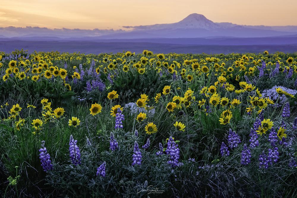 Spring Wildflowers - Eastern Washington