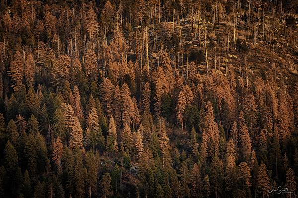 Reason Behind West Coast Infernos