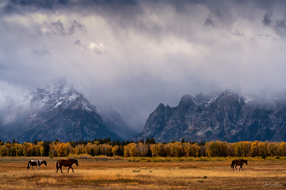 Horses and Grand Teton Range, Wyoming