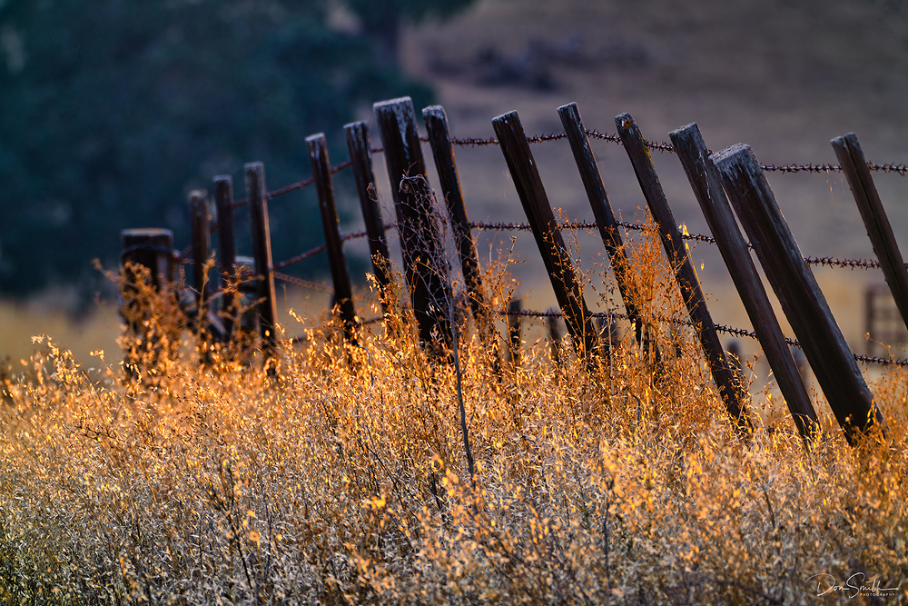 Evening in the Country - Central California