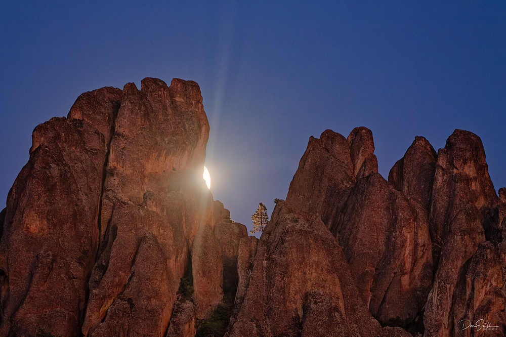 Moonrise and Lit Gray Pine, Pinnacles NP