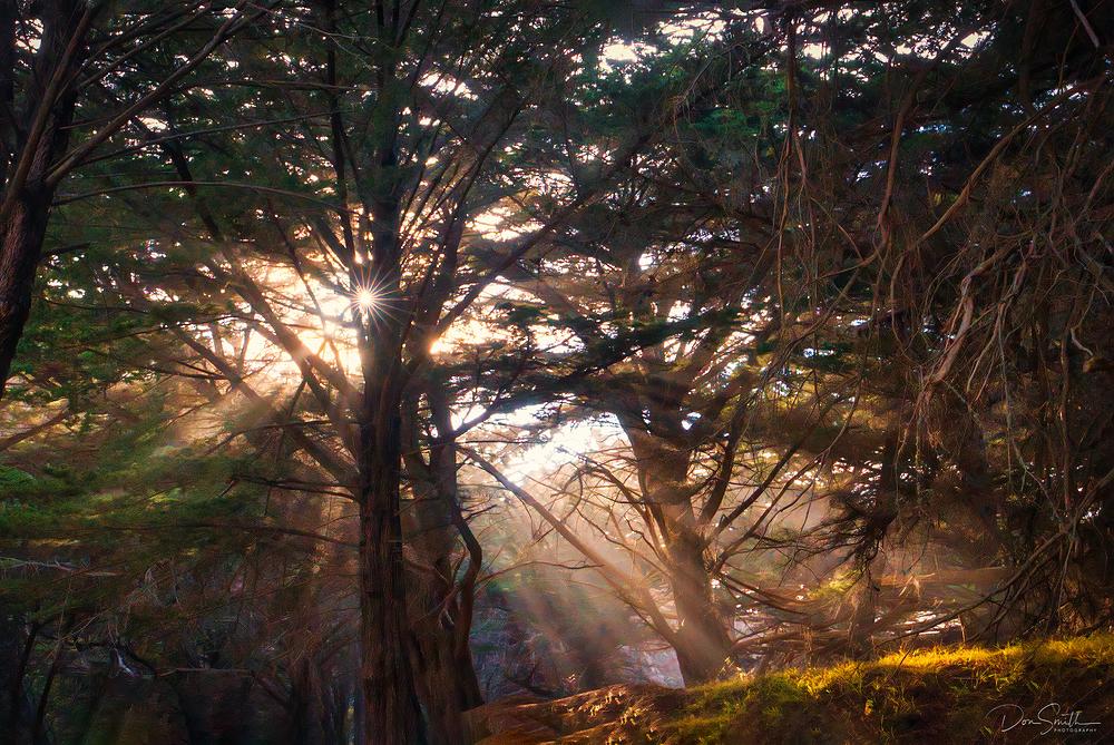 God Beams Through Monterey Cypress, Big Sur Coast