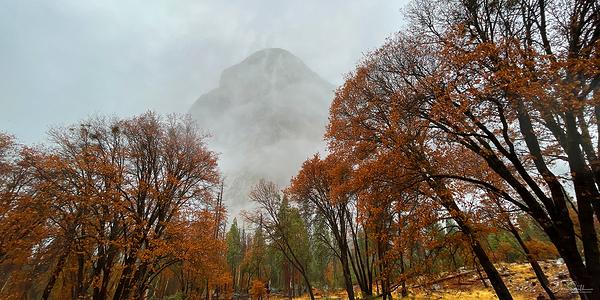 El Capitan and Black Oaks, Yosemite NP