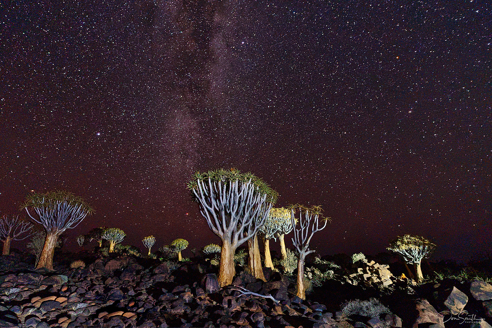 Milky Way Over Quiver Tree Forest, Namibia, Africa