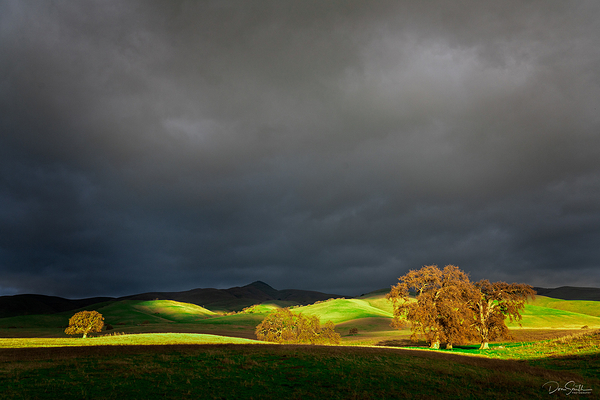 Blue Oaks and Stormy Sky, Central California