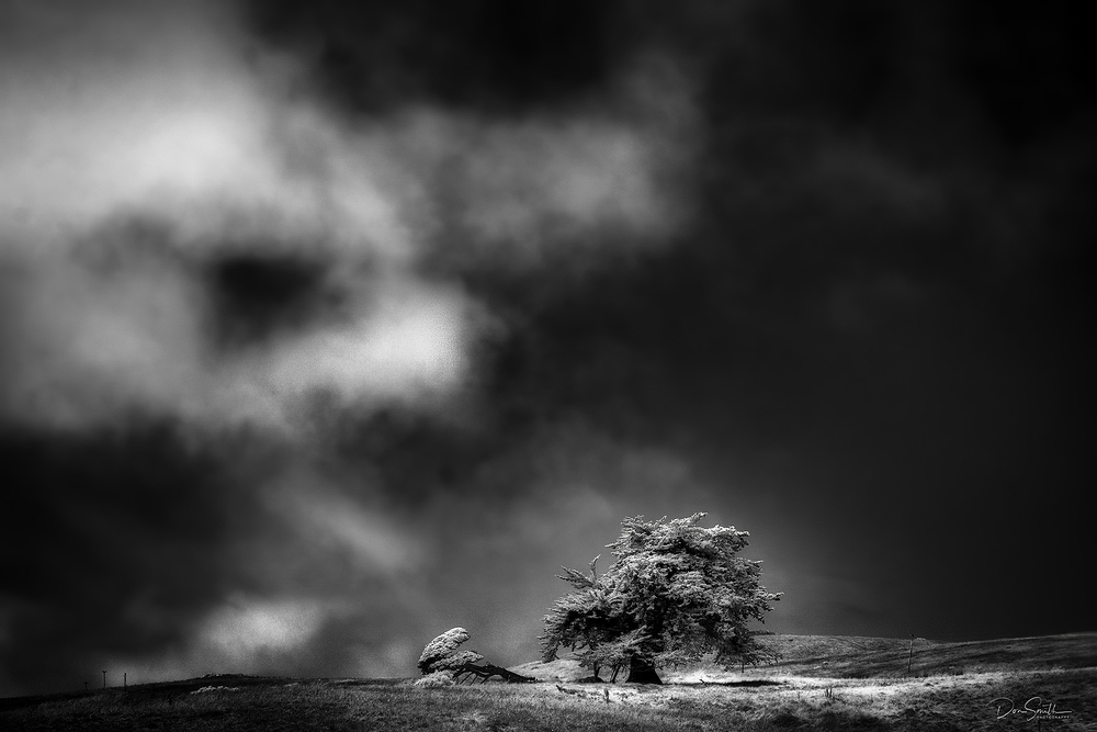 IMAGE #6  Cypress and Fog in Infrared