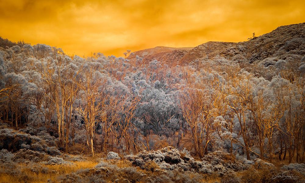 IMAGE #4 - Eucalyptus and Fog, Central California
