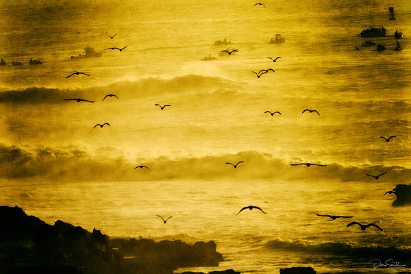 Seagulls Soar at Mavericks, Half Moon Bay, Calif