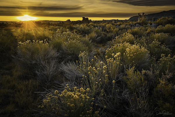 Sunrise and Rabbit Brush, Mono Lake, California
