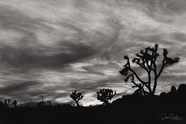 Wind-Whipped Clouds Over Joshua Trees