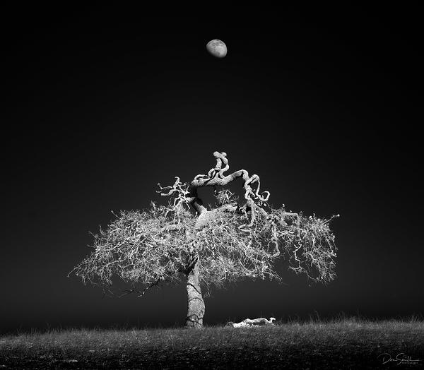 Blue Oak and Rising Moon, Central California