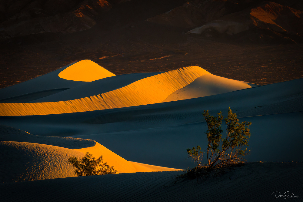 Mesquite Trees and Dunes, Death Valley NP