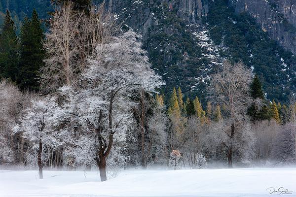 Forzen Yosemite Morning, Yosemite NP